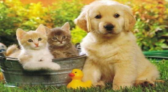 mejores fotos de animales