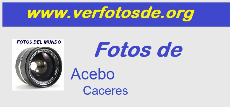 Fotos de  Acebo