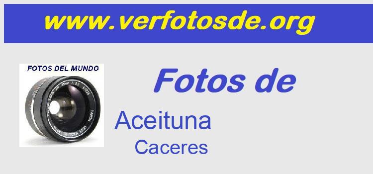 Fotos de  Aceituna